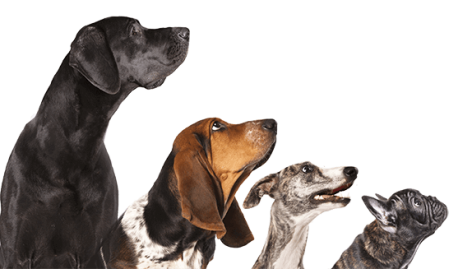 https://www.clinicaveterinariaaltinia.it/sito/wp-content/uploads/2017/04/contactpage1-458x269.png